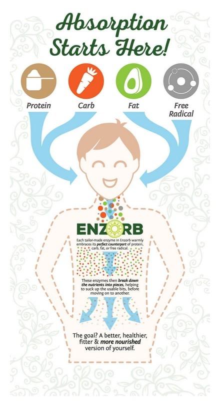 Enzorb Digestion